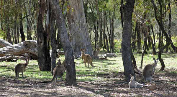 Some visitors to the snow gums