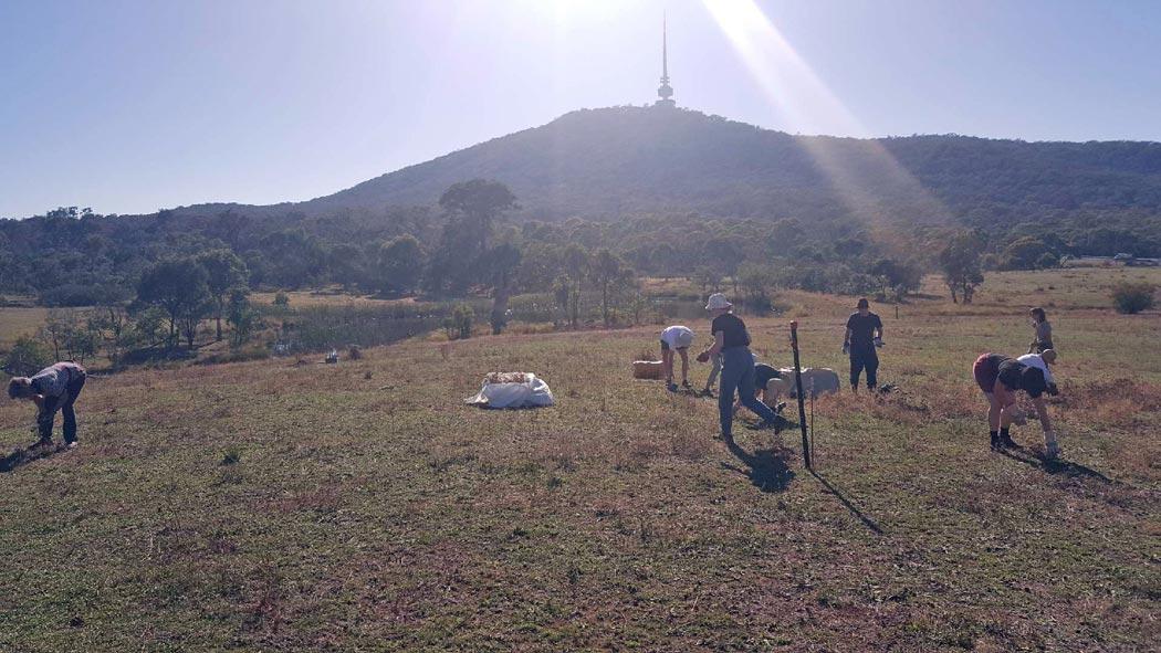 Working in the grassland